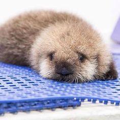Baby otter #love #dog #tagforlikes #tagsforlikes