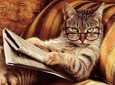 """The """"Unamused by Your Antics"""" Reader 
