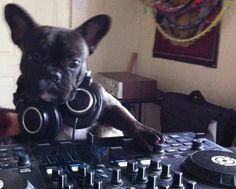 French Bulldog DJ.