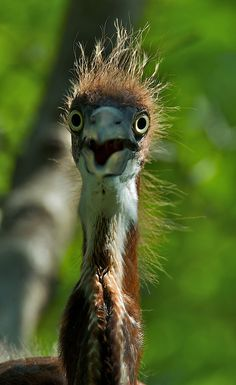 A face to make you smile. Big Bird, Small Birds, Colorful Birds, Beautiful Birds, Animals Beautiful, Mundo Animal, Funny Animals, Animal Funnies, Birds Eye View