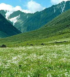 Dzukou Valley – Nagaland: The most beautiful and charming valleys of Nagaland, located at the border of the Indian states of Manipur and Nagaland. The dzukou valley is well known for its wonderful trekking spots and breathtaking natural sanctuary. Dzukou valley located behind the Japfu peak and entire valley is overshadowed with a type of tough bamboo and abundant natural beauty. During the winter,valley hills are covered with snow and in later season it seems like a carpet of wild flowers.