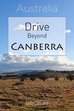 Travel Australia | New South Wales | NSW South Coast | Australian Coast | Australian Beaches | Road Trip | Batemans Bay | Kangaroos on the Beach | Australia | Canberra | Pebbly Beach | Australian Holidays | Road Tripping