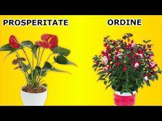 🍀 5 plante care o să-ți facă soțul prosper