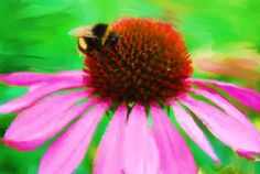 Bumble bee and echinacea flower print by NewCreatioNZ on Etsy, $20.00