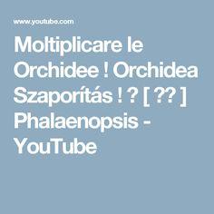 Moltiplicare le Orchidee ! Orchidea Szaporítás ! 蘭 [ ラン ] Phalaenopsis - YouTube