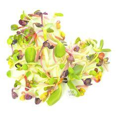 MIxed sprouts of #Sunflower, #Clover and #Radish in #heart - #Solsikkespirer, #Kløverspirer, #Radisespirer i #hjerteform. Find #økologiske #spirefrø på https://spirefroe.dk/spirefroe