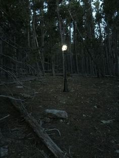 Man Builds a Bit of Narnia in the Woods for His Girlfriend to Discover - Neatorama