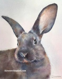 """""""William"""", watercolor bunny rabbit painting by animal artist Teresa Silvestri.  Original sold, but prints & cards available.  Photo reference thanks to East Bay Rabbit Rescue."""