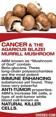 "ABM known as ""Mushroom of God"" contain Beta-glucans. These long-chain polysaccharides are the most potent immune enhancing substances yet found. They have very powerful anti-tumor properties. ABM's increase NK cells, a type of anti-tumor white blood cell known as Natural Killer cells. #dherbs #healhtips by rae"