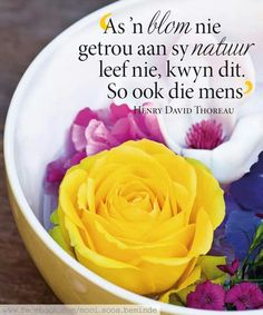 Soos n blom Afrikaanse Quotes, Soul Songs, Goeie More, Printable Quotes, Woman Quotes, Words, Printables, Hart, Belgrade