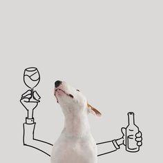 Bull-Terrier-Photo-chien-6
