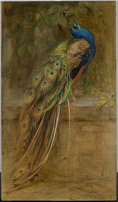 Peacock, by Edwin John Alexander, 1899 Peacock Wall Art, Peacock Painting, Peacock Pictures, Art Pictures, Bird Drawings, Animal Paintings, Bird Art, Indian Art, Beautiful Birds