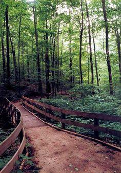 Jefferson Memorial Forest in Louisville
