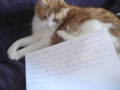 « I'm Cookie. I love meowing all day long … On days when my mistress works, I put myself in alarm mode for 1 hour. And in the evening when she comes back,  I continue to bellow for croquettes (I am a morfallou) and then I chew her calves in revenge for her absence but when I do my Puss in Boots eyes, she forgives me :) « #lolcats #shameyourpet #shameyourcat #cat #cats #chats