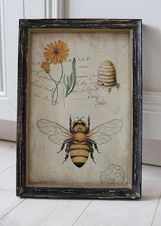 ≗ The Bee's Reverie ≗ Antique Bee Print | Badhusviken
