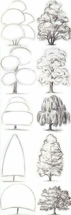 Drawing Tips Tree Drawing Tutorial. Start with basic geometric shapes. Pencil Art Drawings, Drawing Sketches, Drawing Lips, Basic Drawing, Drawing Step, Drawing Drawing, Drawing Skills, Basics Of Drawing, Landscape Pencil Drawings