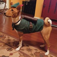 A Dog Wearing A Robin Hood Costume