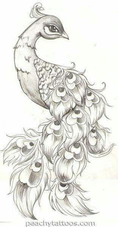 Peacock tattoo sketch this is really awesome Animal Drawings, Cool Drawings, Tattoo Drawings, Drawing Sketches, Pencil Drawings, Drawing Ideas, Sketching, Drawing Tips, Sketch Tattoo