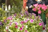 Care of Wave Petunias | eHow