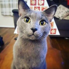 **Please share – help us find Toby** Cat lost in Netherton, Bootle area. His name is Toby and has been missing since Sunday night. Please get in touch if you see him so we can get him home! Thank you. Via Lost and Found In Liverpool.