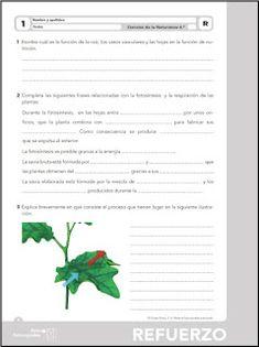 Colegio José Calderón: Actividades de refuerzo y ampliación, Proyecto Aprender es crecer. Ciencias Naturales, 4º de E. Primaria