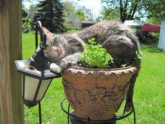 25 Hilarious Cat-Plants You Definitely Shouldn't Water. Neko, Cat Plants, Owning A Cat, Cat Sleeping, Kawaii, Cat Love, Cool Cats, Funny Cute, Cat Art