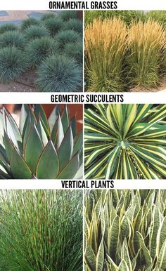 Drought tolerant plants for modern landscapes in San Diego  #ModernLandscaping