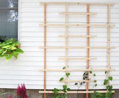 DIY trellis - Gina Michele Cedar Trellis, Diy Trellis, Garden Trellis, Trellis Ideas, Wall Trellis, Garden Fences, Diy Garden, Garden Boxes, Garden Landscaping