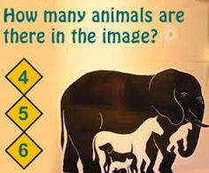 how many animals do you see?