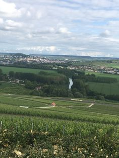 Le vignoble de Champagne - visit it during your homestay Programme Adeline, Language School, France, Vineyard, Golf Courses, Outdoor, Chinese Language, Language Lessons, Learn English