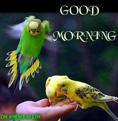 Happy good Sunday morning a Henry. Hope you had a good sleep xoxo g  g xox
