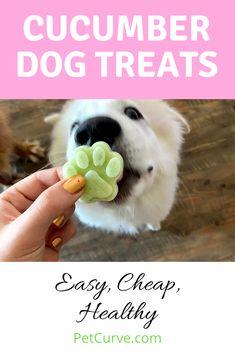Summer Dog Treats, Frozen Dog Treats, Diy Dog Treats, Homemade Dog Treats, Healthy Dog Treats, Easy Dog Treat Recipes, Dog Recipes, Golden Doodles, Dog Items