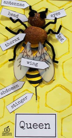 queen bee craft game who can correctly label each part of the bee in 60 seconds wins.