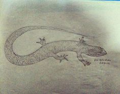 Lizard #lizard #sketchedbyme🎨 ✌😎 #drawing #draw #sketch #art #artist #arte #artoftheday #artistic #artsy #illustration #instaart #instaartist #worldofpencils #instalike #talented #masterpiece #beautiful #talent #creative  #sketching #instadraw #instafollow #amazingamazing #pencil #followme #follow