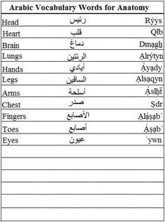 Arabic Vocabulary Words for Anatomy - Learn Arabic