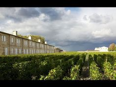 Finest and Rarest Wines Direct From Great Estates