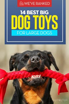Top 14 Best Big Dog Toys for Large Dogs (that won't get destroyed fast)