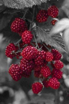 Pop! Red raspberries…