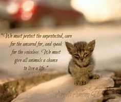 We must protect the unprotected . . .