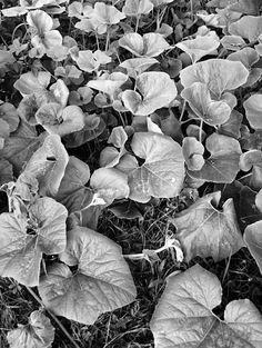 20.8 Photo Black, Black And White, Black N White, Black White