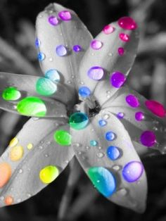 Colour: As you can see colour has been used very well in this photo. The flower has had a black and white effect put on it and then the water drops have had colours put on them.