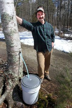 Want to top your pancakes with something other than maple? The alternatives vary, depending on the types of trees in a region. There's Kahiltna birch syrup made in Alaska, blue spruce pine syrup from Utah and Georgian black walnut syrup. Maple Syrup Taps, Spruce Pine, Blue Spruce, Black Walnut Tree, White Birch Trees, Herbs For Health, Hickory Tree, Mini Farm, Living Off The Land