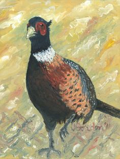 Pheasant by Jeanne Gordon