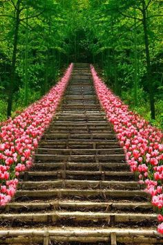 The Infinite Gallery : Tulip Stairs, Kyoto, Japan. HOW STUNNING TO SEE THIS AMAZING WORLD WE LIVE IN. Bella Donna