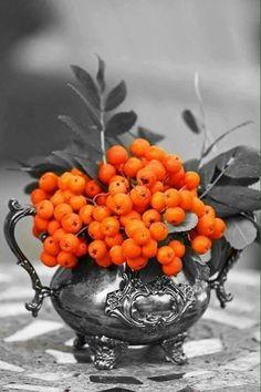 Splash of color Black And White Colour, Black And White Pictures, Orange Color, Color Pop, Orange Grey, Gray, Orange You Glad, Orange Is The New, Splash Photography