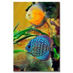 Kurt Shaffer 'Two Tropical Fish' Canvas Art | Overstock.com Shopping - Top Rated Trademark Fine Art Canvas