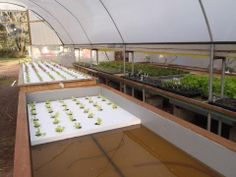 (5) Murray Hallam's Practical Aquaponics