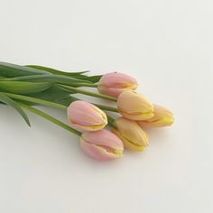Plants Are Friends, Love Me Forever, Tulips, Beautiful Flowers, Skate, Palette, Language, Color, Flowers