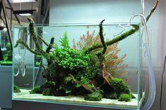 Cool Natural Aquascape