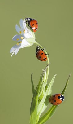 Ladybug Wet With Dew Amazing Shot  A Fish Called Sheri Simple Small Insects In Bathroom Inspiration